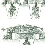 календарь работ в саду, цветники,клумбы,клематисы